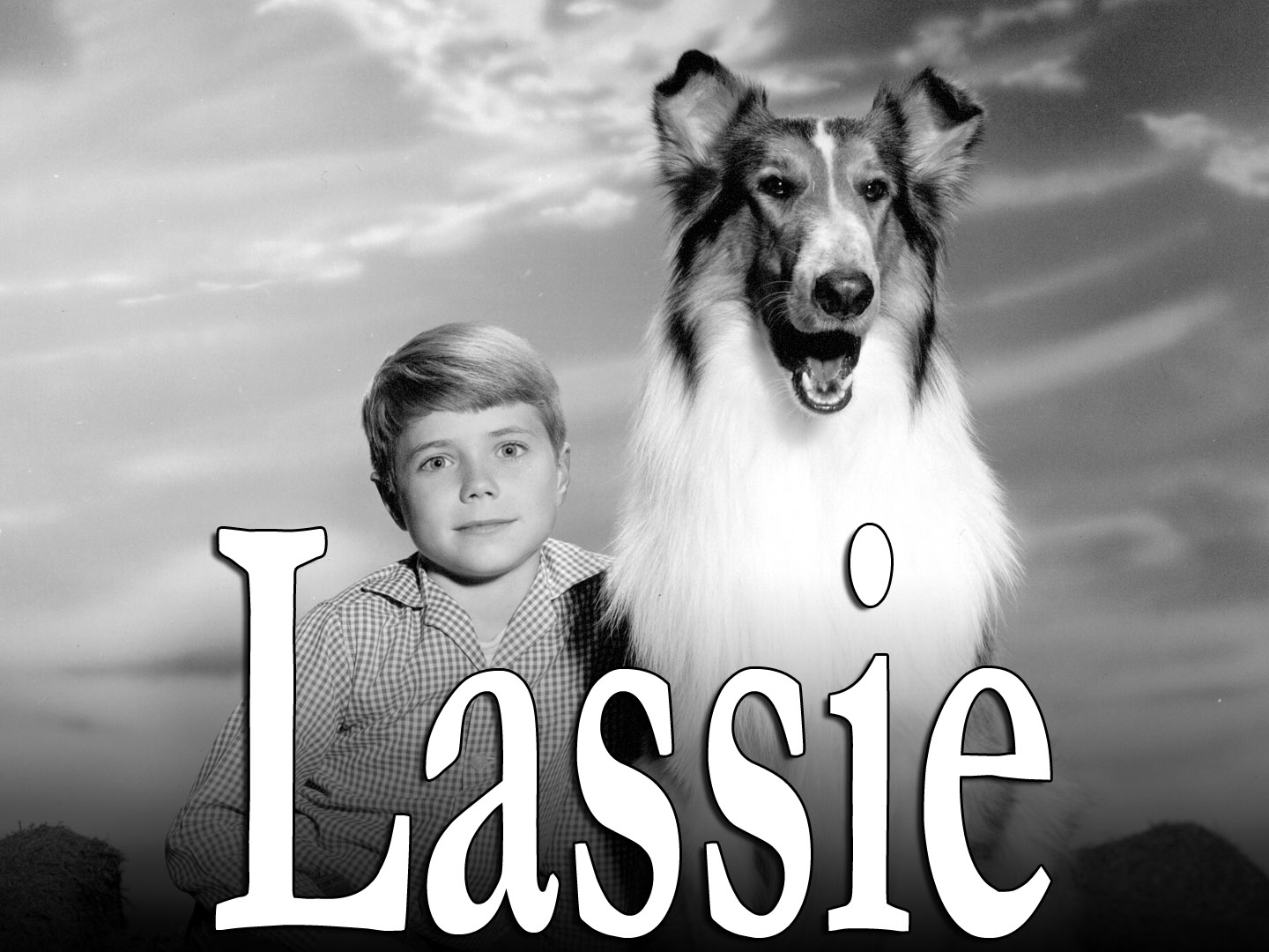 Letter From Lassie the Dog  to Ogletree Deakins